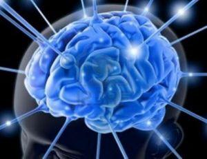 21052014_cervello_01